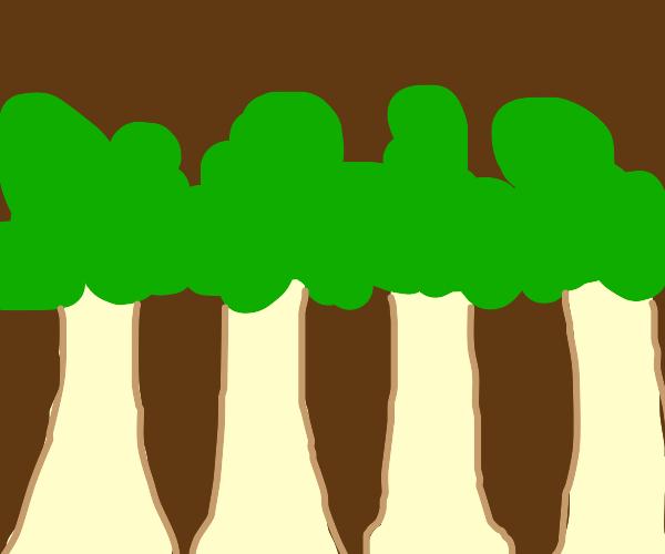 four baige trees, green foliage, brown b/g