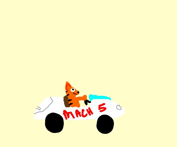 Cat racer