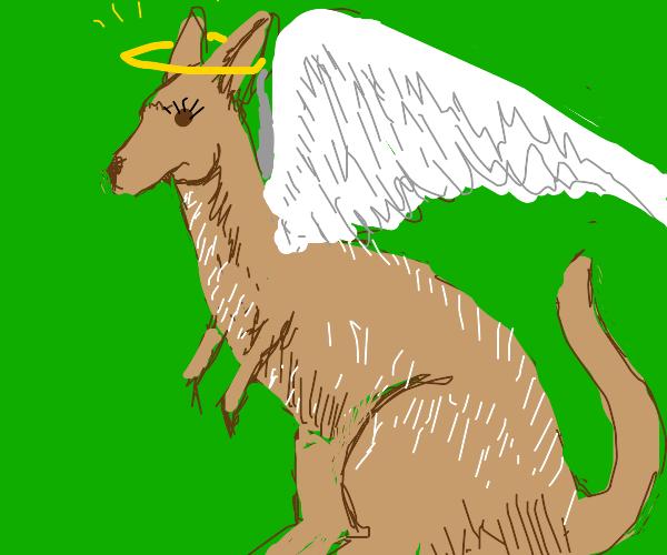 Angelic Kangaroo