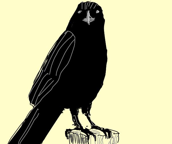 Shadowy raven