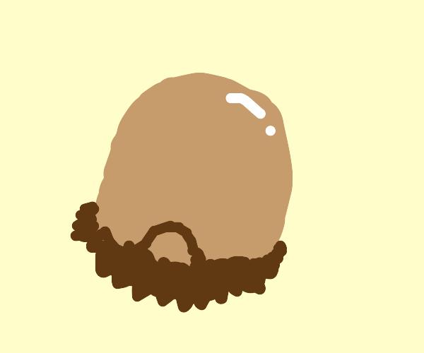 bearded egg
