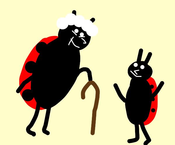Grandma ladybug and her grandson
