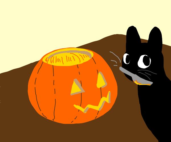 Black Cat Carving a pumpkin