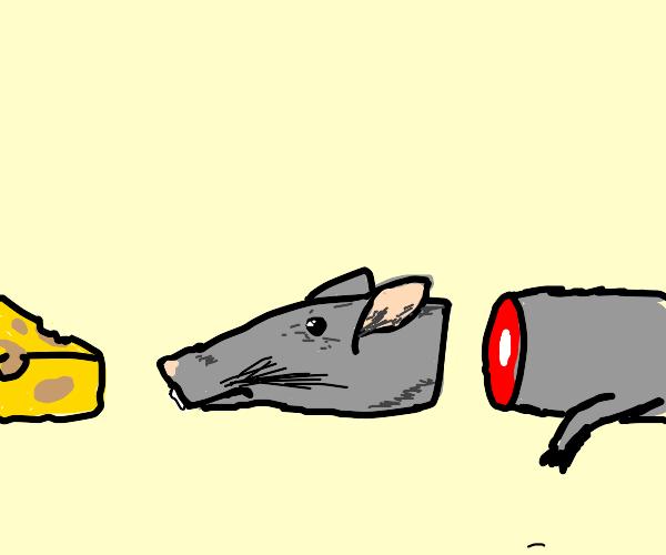 Sad rat severed head :(