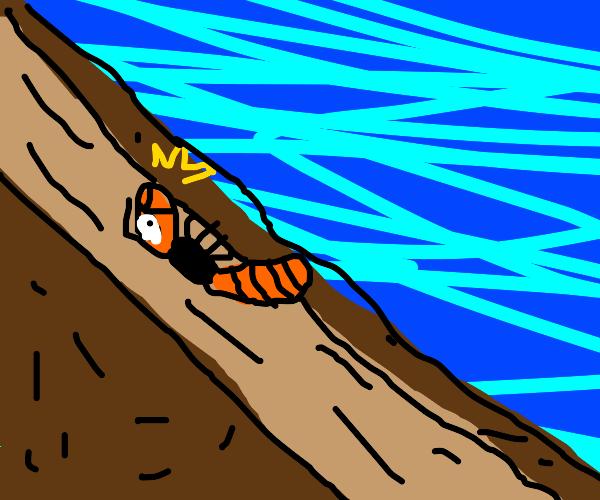Hornet in a Mudslide