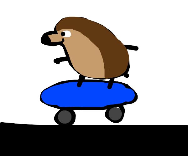 hedgehog on a skateboard
