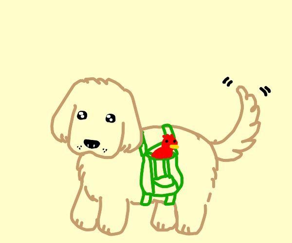red bird rides in dog's backpack