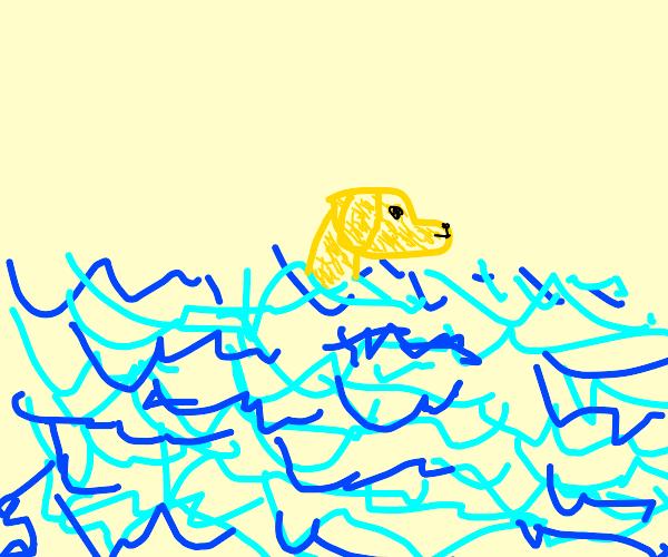Skinny dog treading water alone