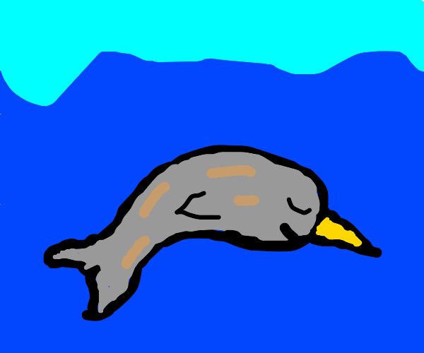 Narwhal Narwhal swimming in the ocean
