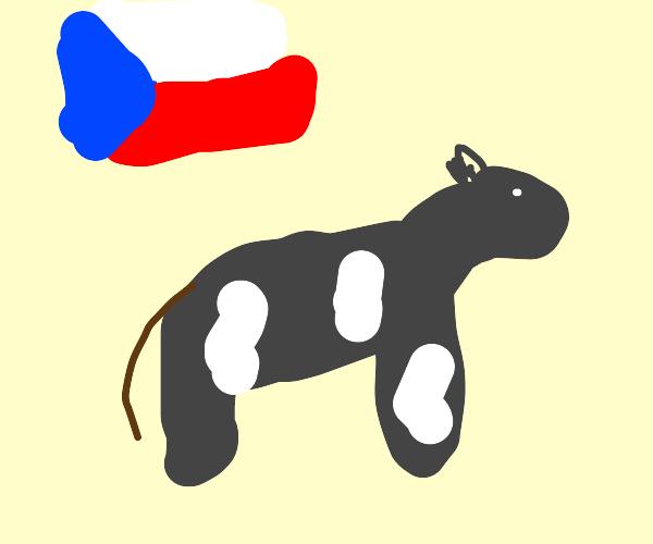 Cow from Czech