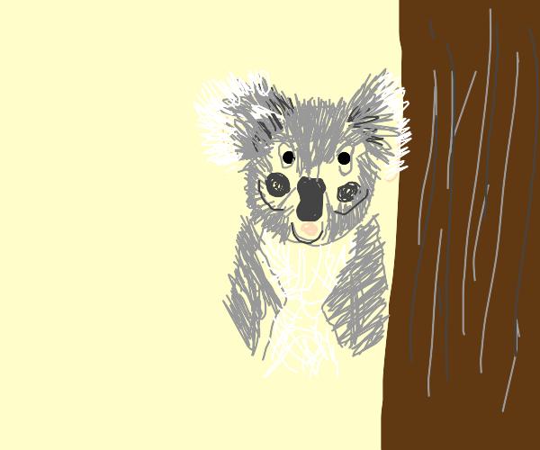 Artistic Koala