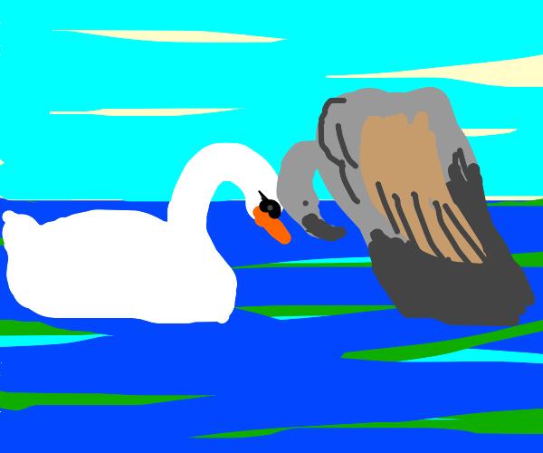 Vulture loves Swan
