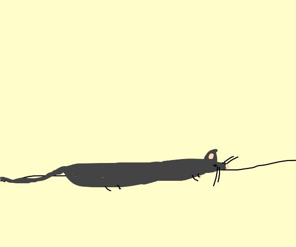 Flattened Rat