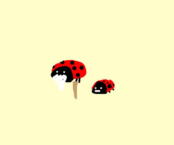 Old Ladybug