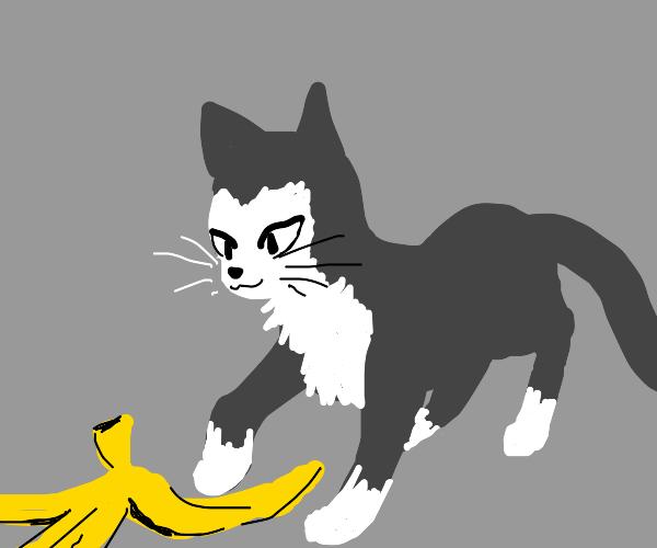 cat steps a banana peel