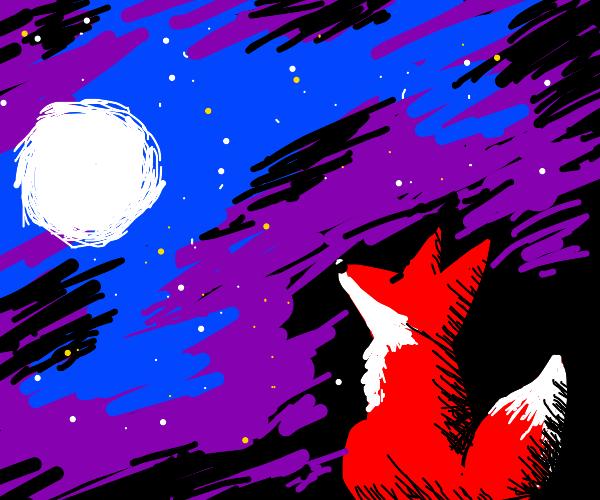 Red fox watches a beautiful night scenery