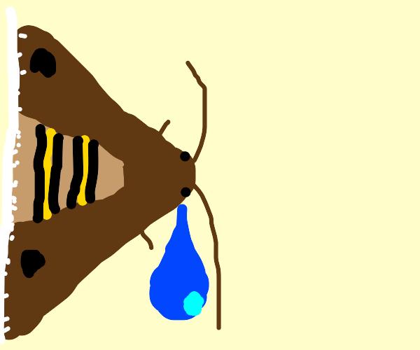 Moth Crying
