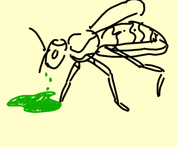 Wasp vomiting