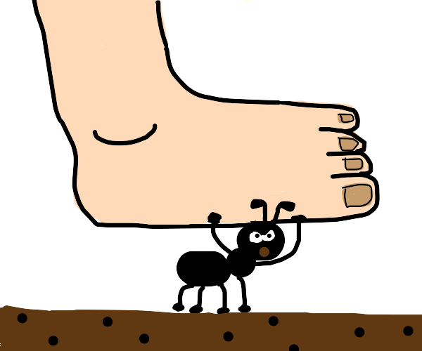 No step on ant