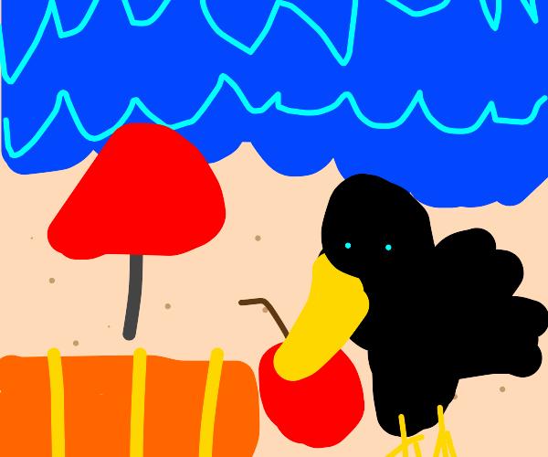 Crow eats food on the beach.
