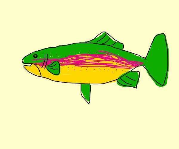 Mega Rainbow Trout