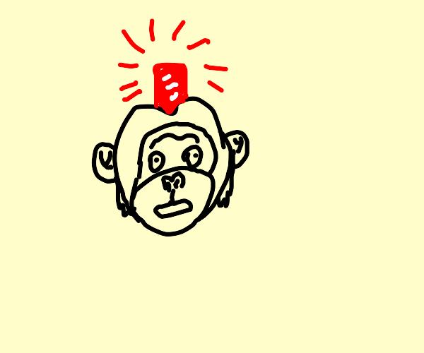Alarmed chimpanzee