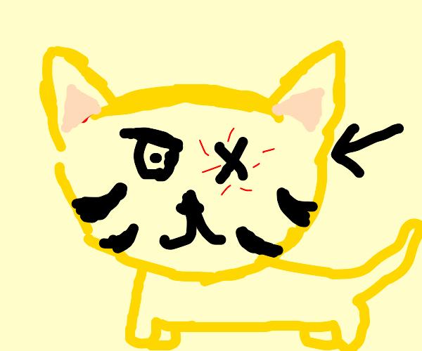 one eyed cat thing