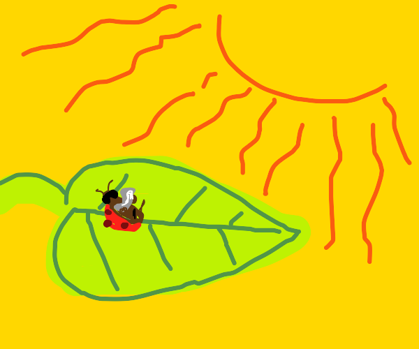 lady bug on a leaf in the sun :)