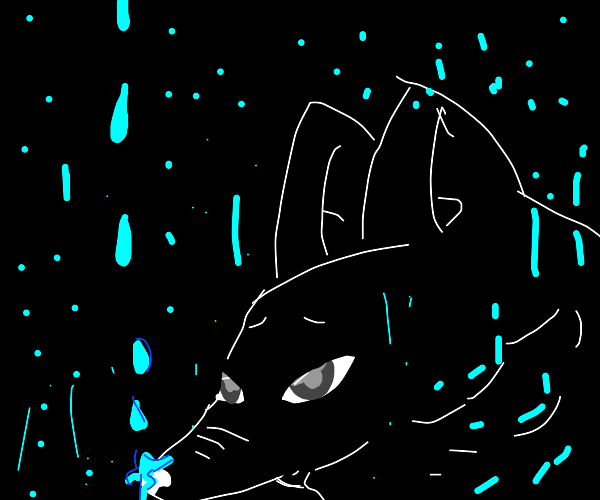 raindrop and wolf