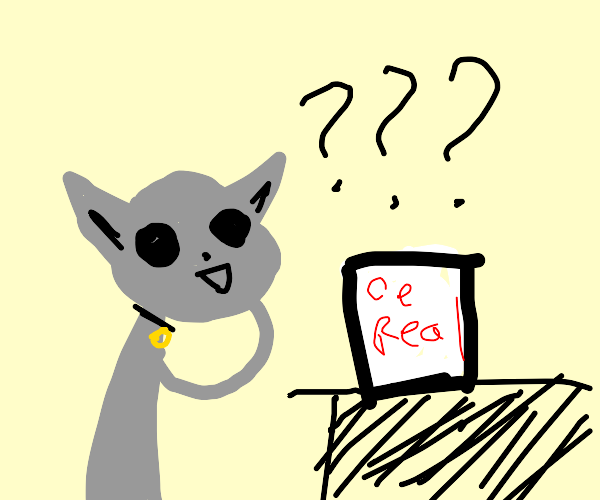 Cat questioning cereal