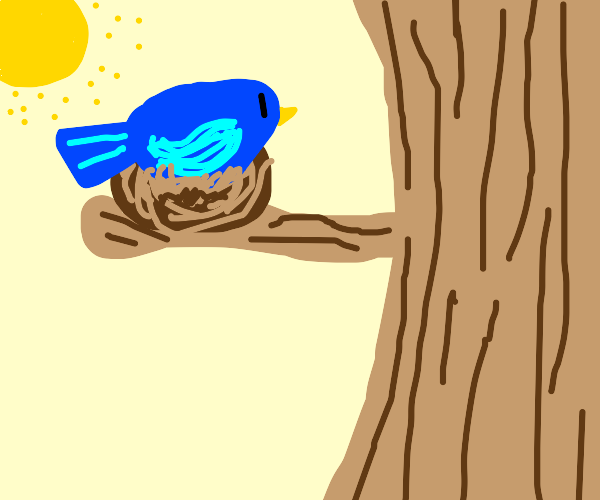 A blue bird sits in a nest in broad daylight.