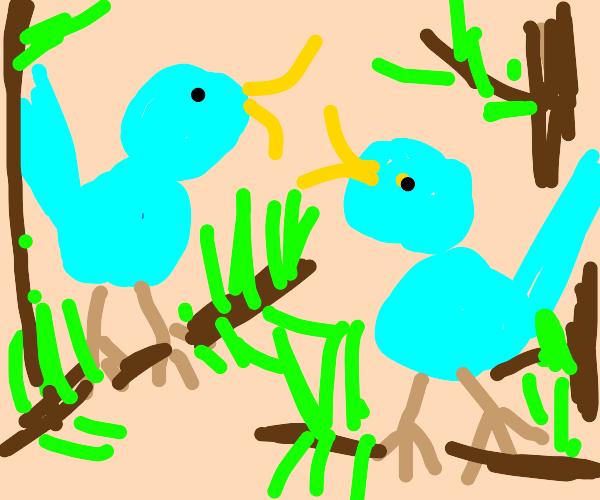 Blue birds conversation