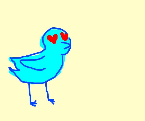 bird with heart pupils