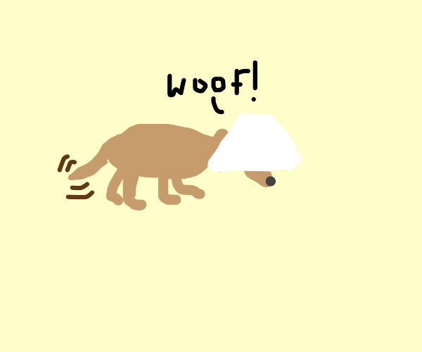 dog with lamp shade on its head