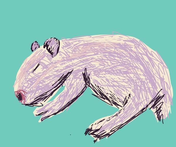 Capybara sleeping