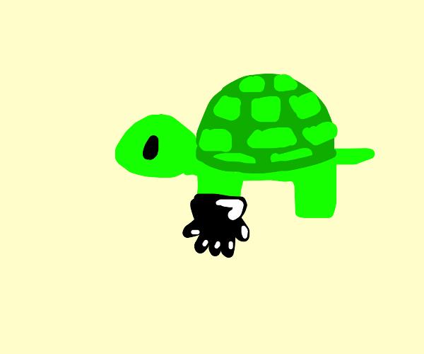 Turtle wearing Gloves