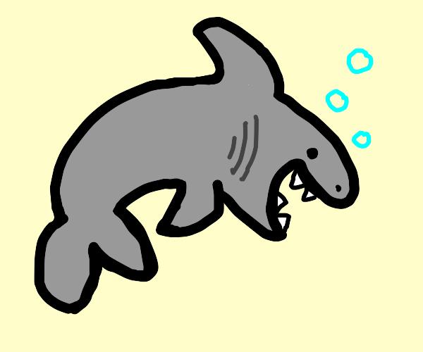 shark boi
