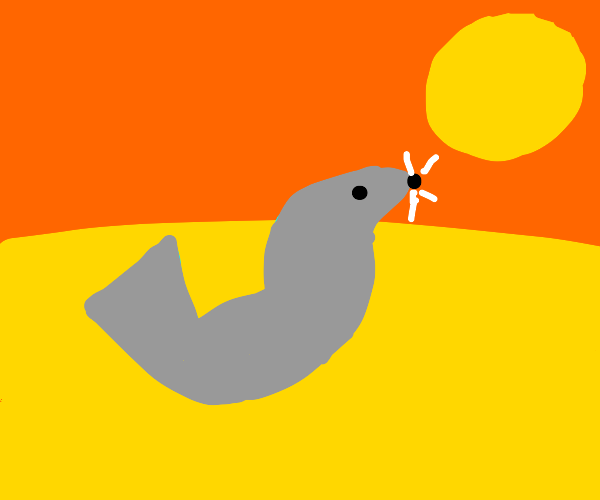 A seal in the desert