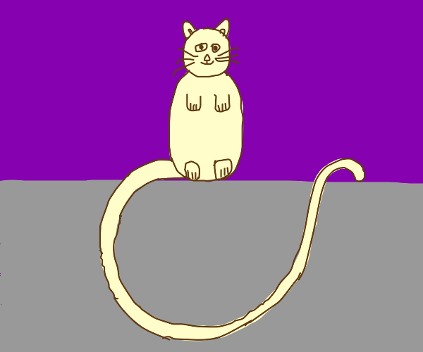 Cat with a long tail