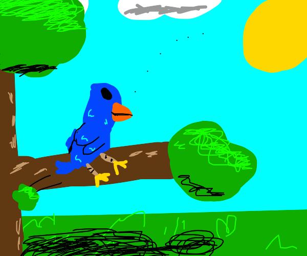 bird looks at the sky