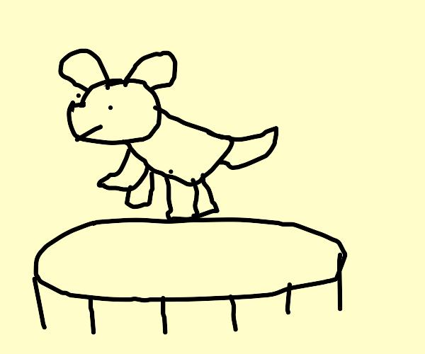 Doggo on a Trampoline