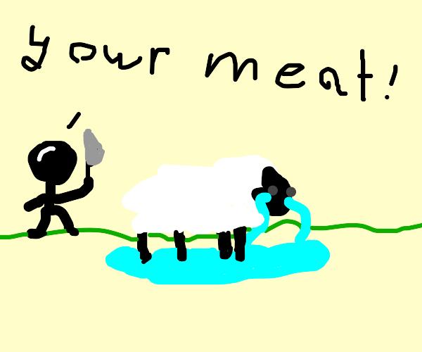Sad sheep :(