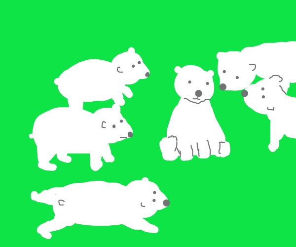 a bunch of polar bears :)