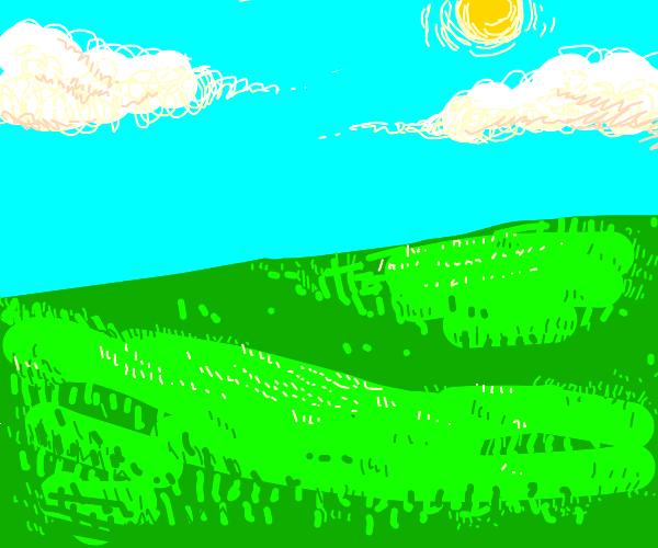 Grassy plain on sunny day