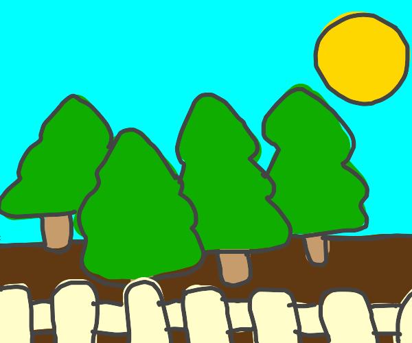 Big Tree landscape