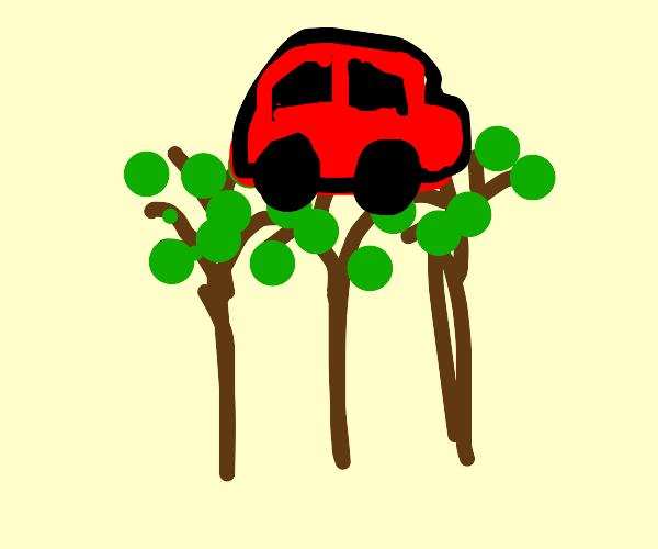a car on trees