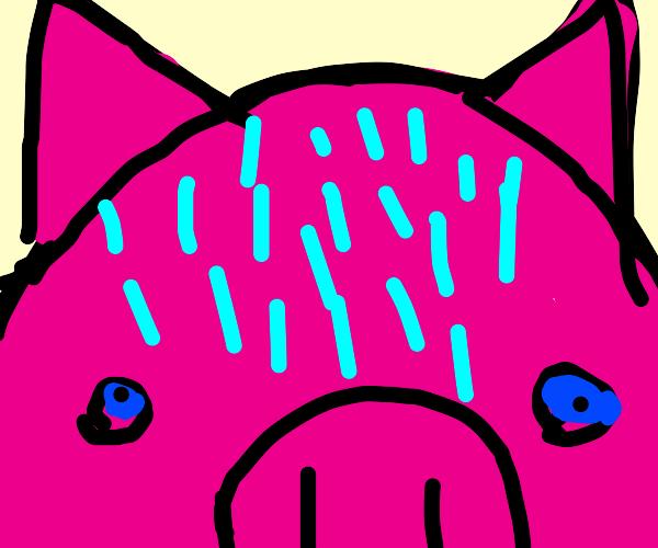 forehead pig sweat