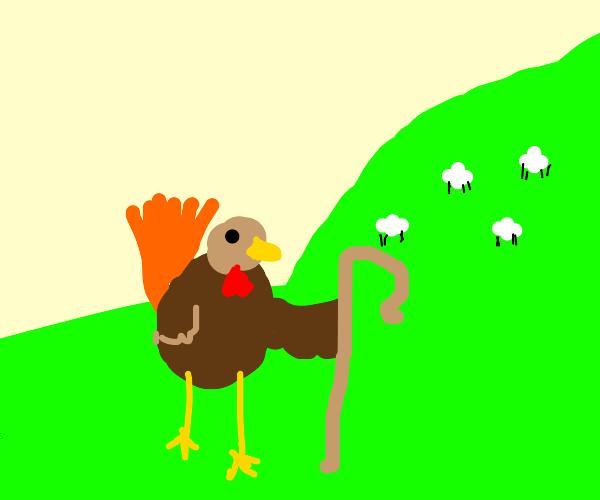 Garden turkey shepherd