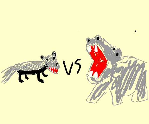 Badger vs Hippo