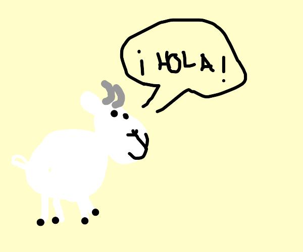 """goat saying """"hola"""" !"""